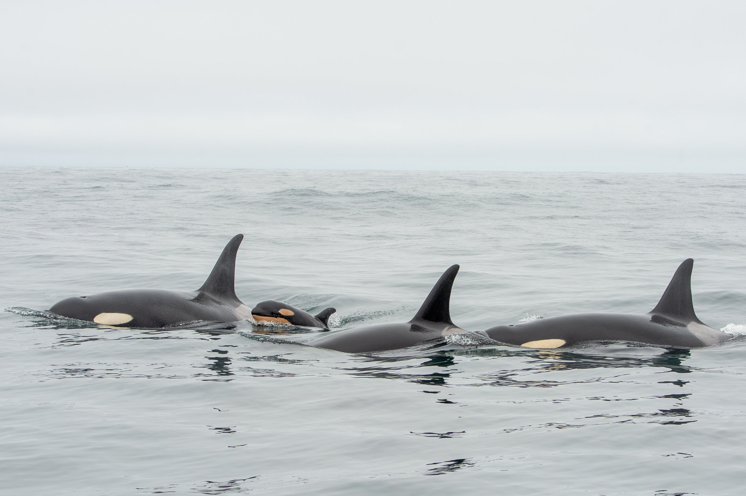 J19, J41 and new calf