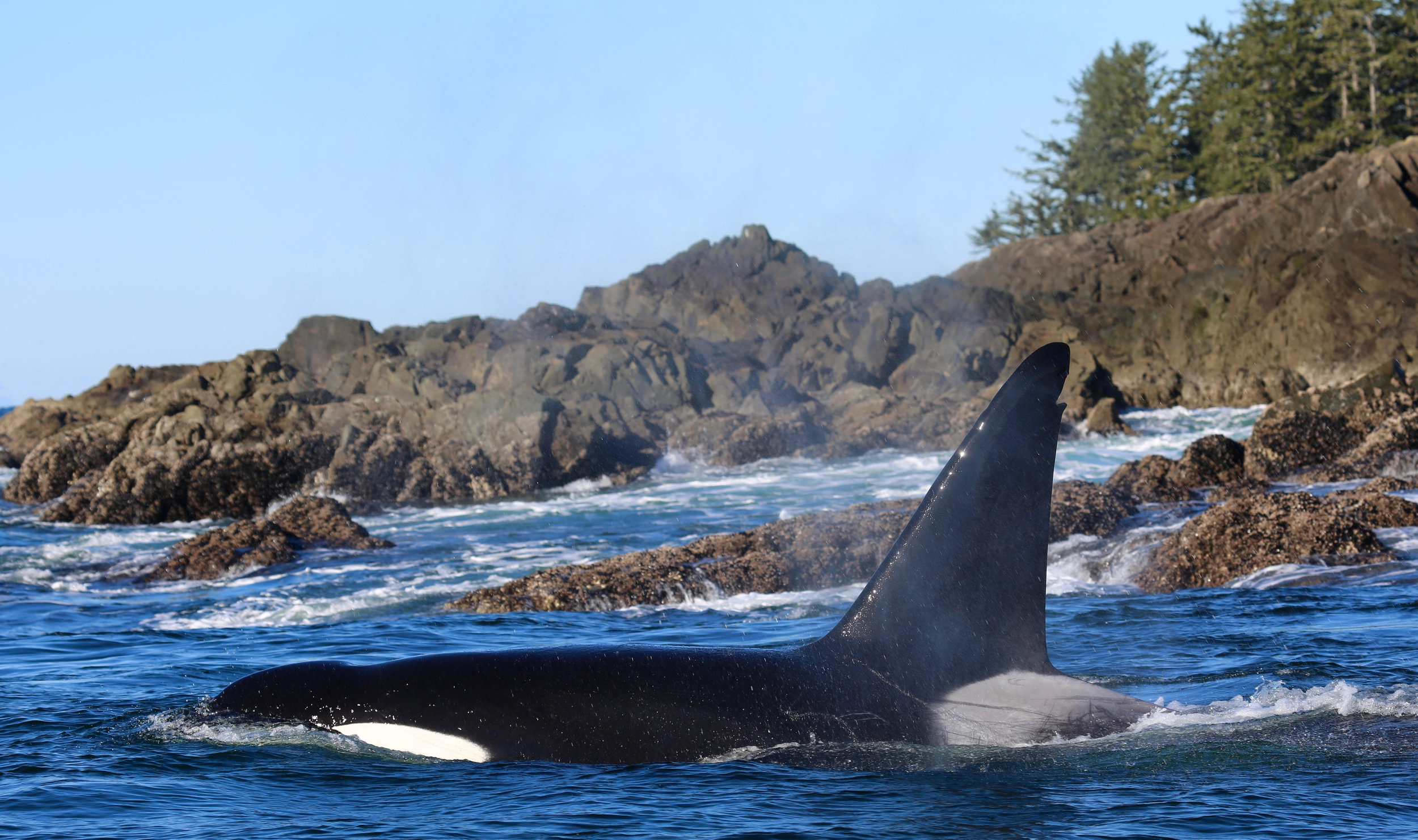 Tofino Whale Watching Tour .jpg