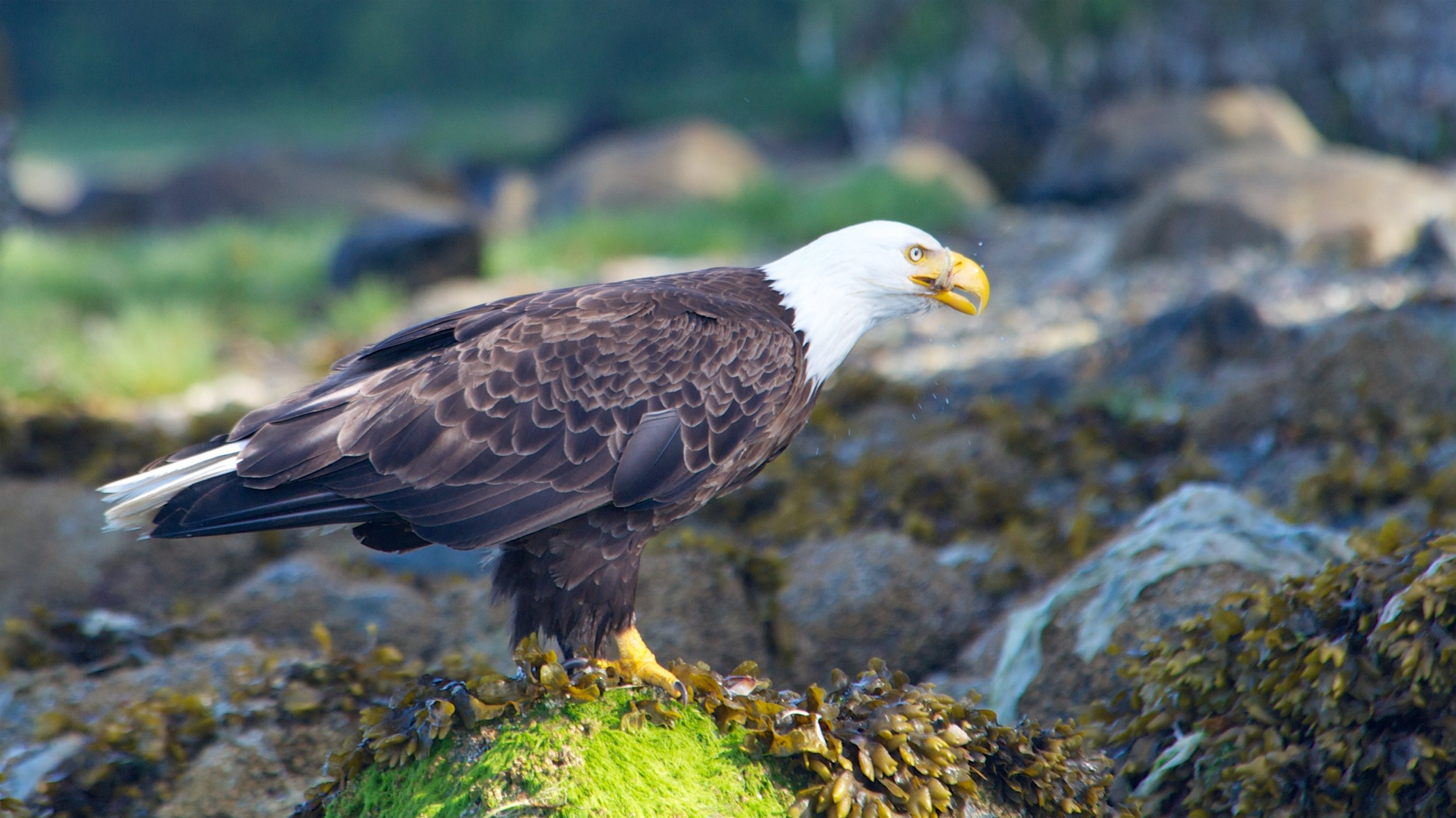 Bird Watching Tour Tofino.jpg