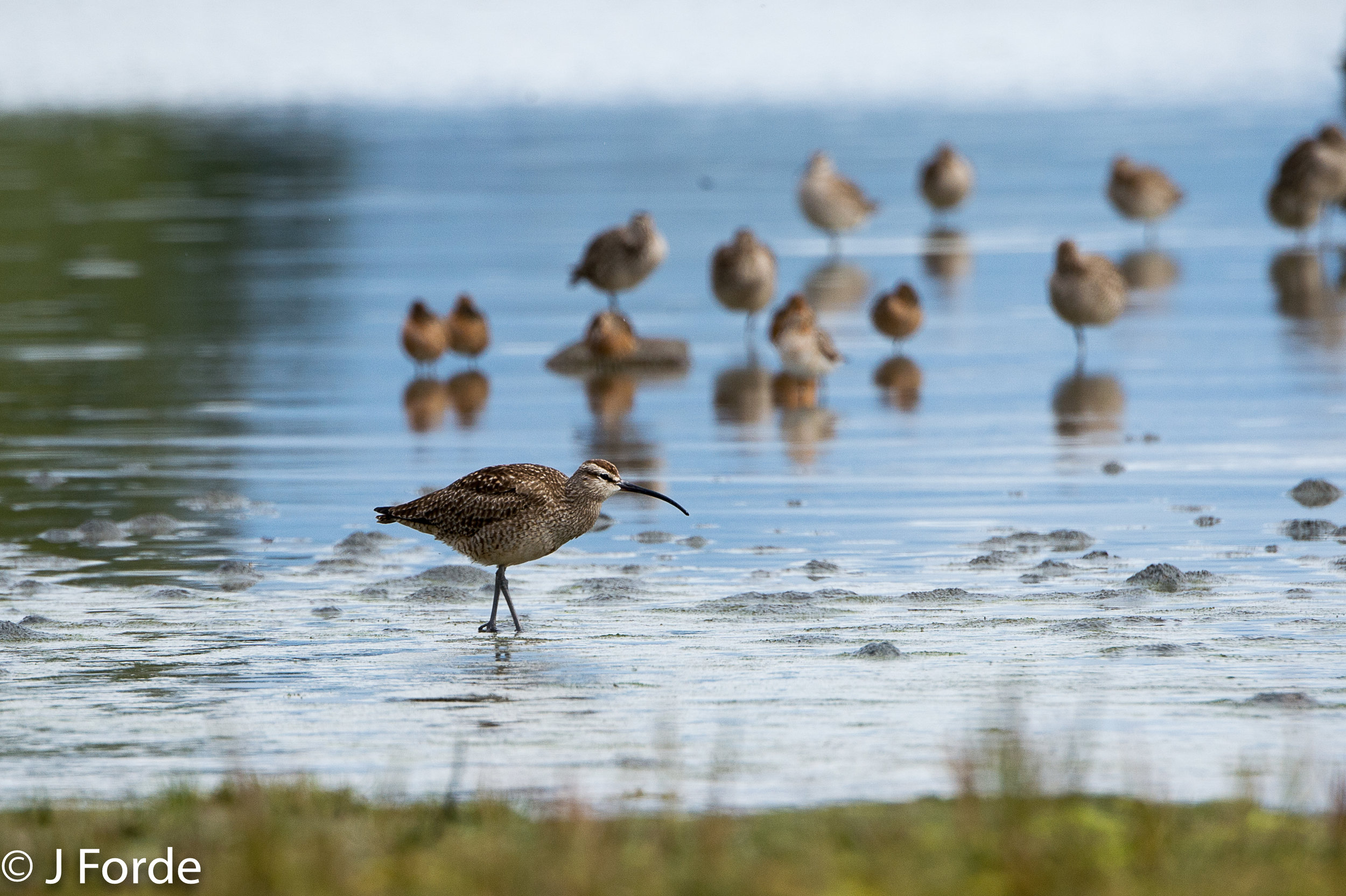 Birding Tofino.jpg