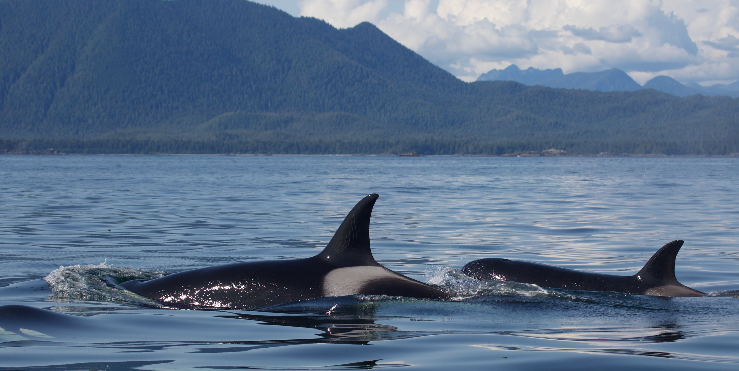 Whale Watching Tour, Tofino