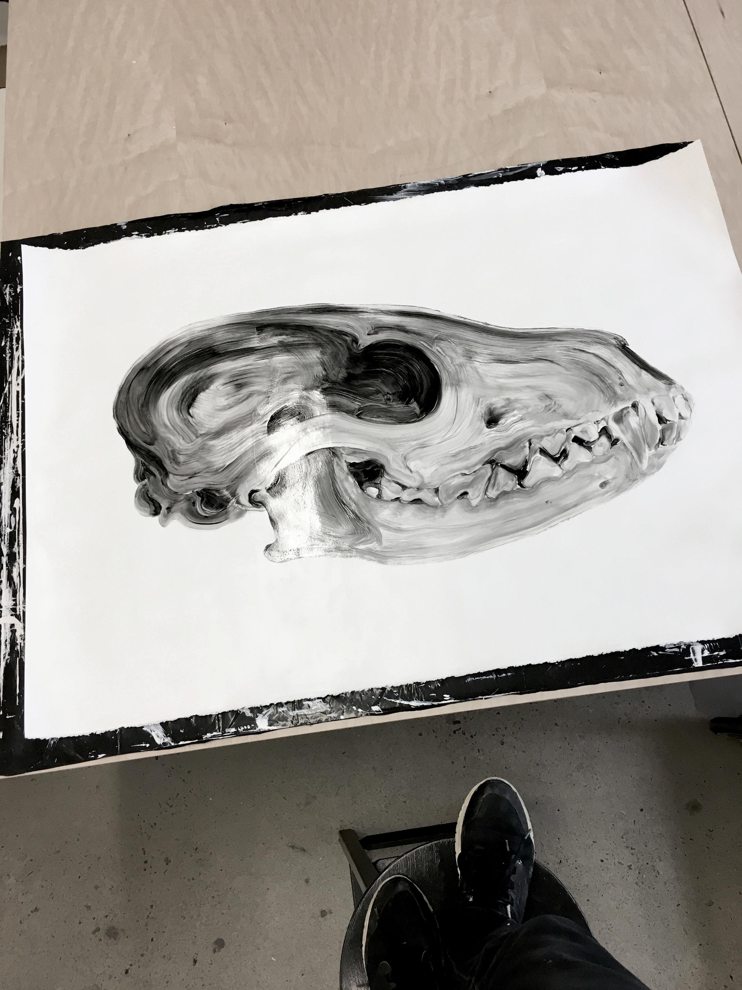 Crâne d'un renard  Huile sur papier