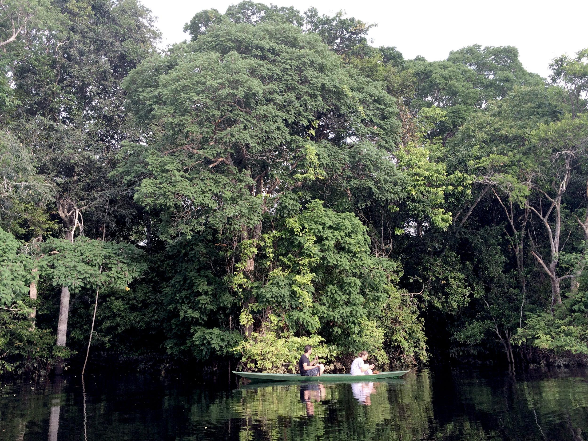 Amazonie, Brésil