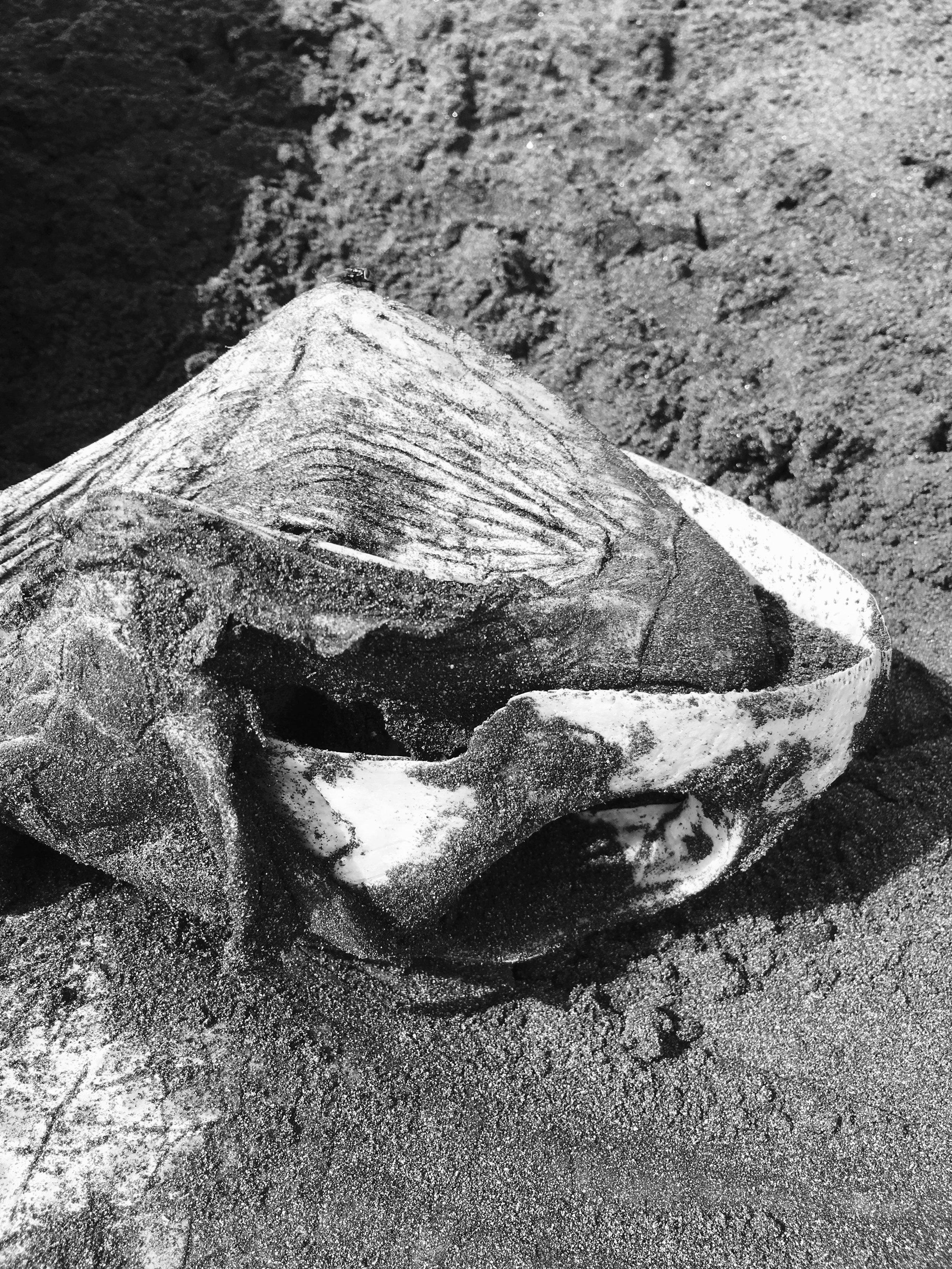 Tête d'une tortue sur la plage  Tortuguero, Costa Rica
