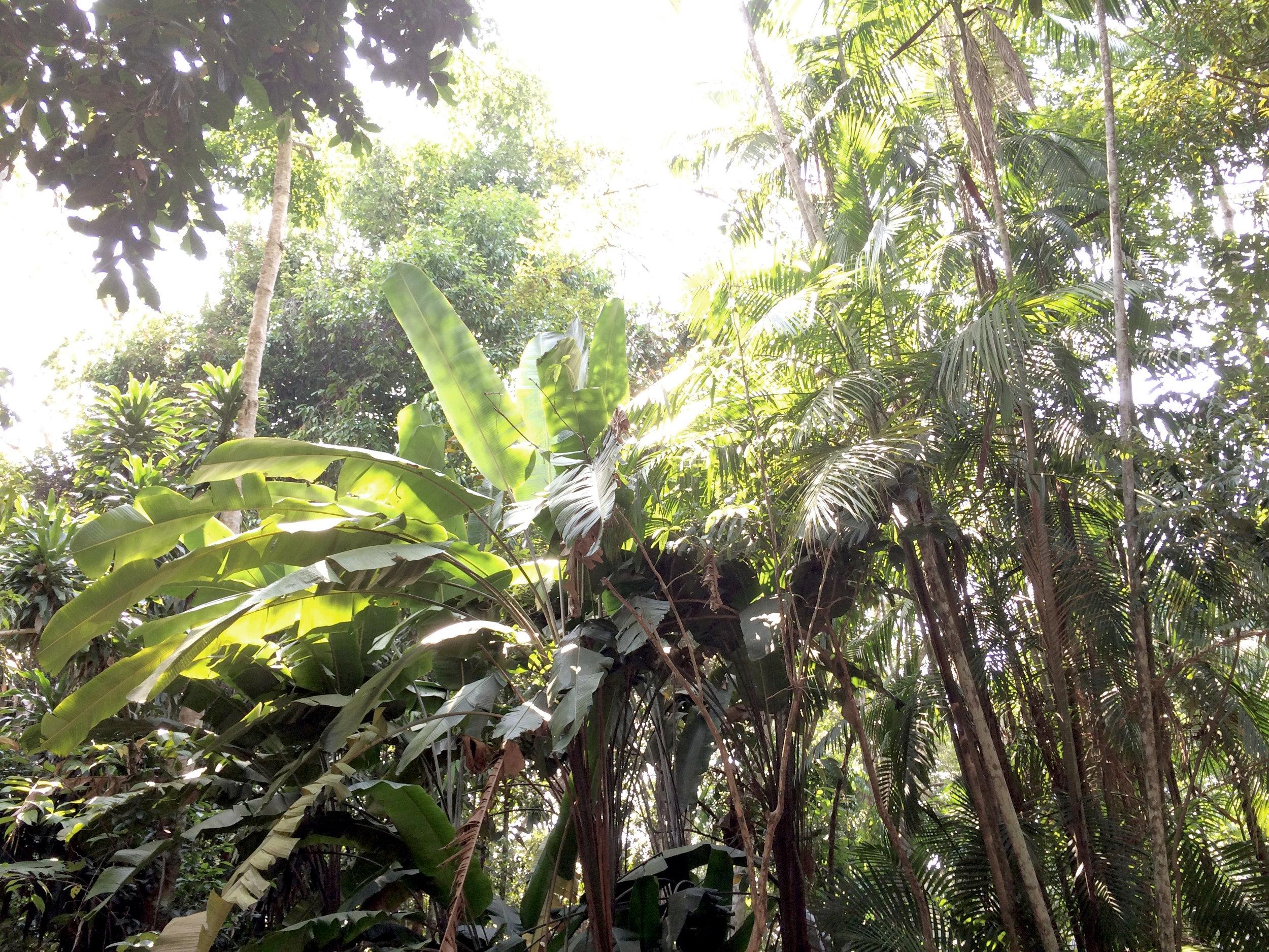 Jungle  Manaus, Brésil