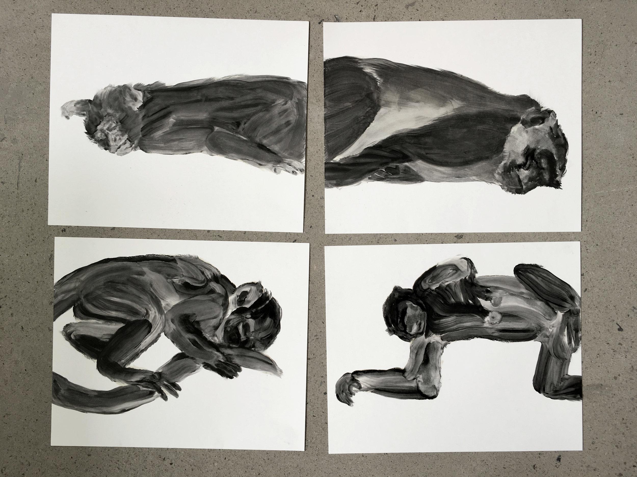 Études à l'huile sur papier, macaques