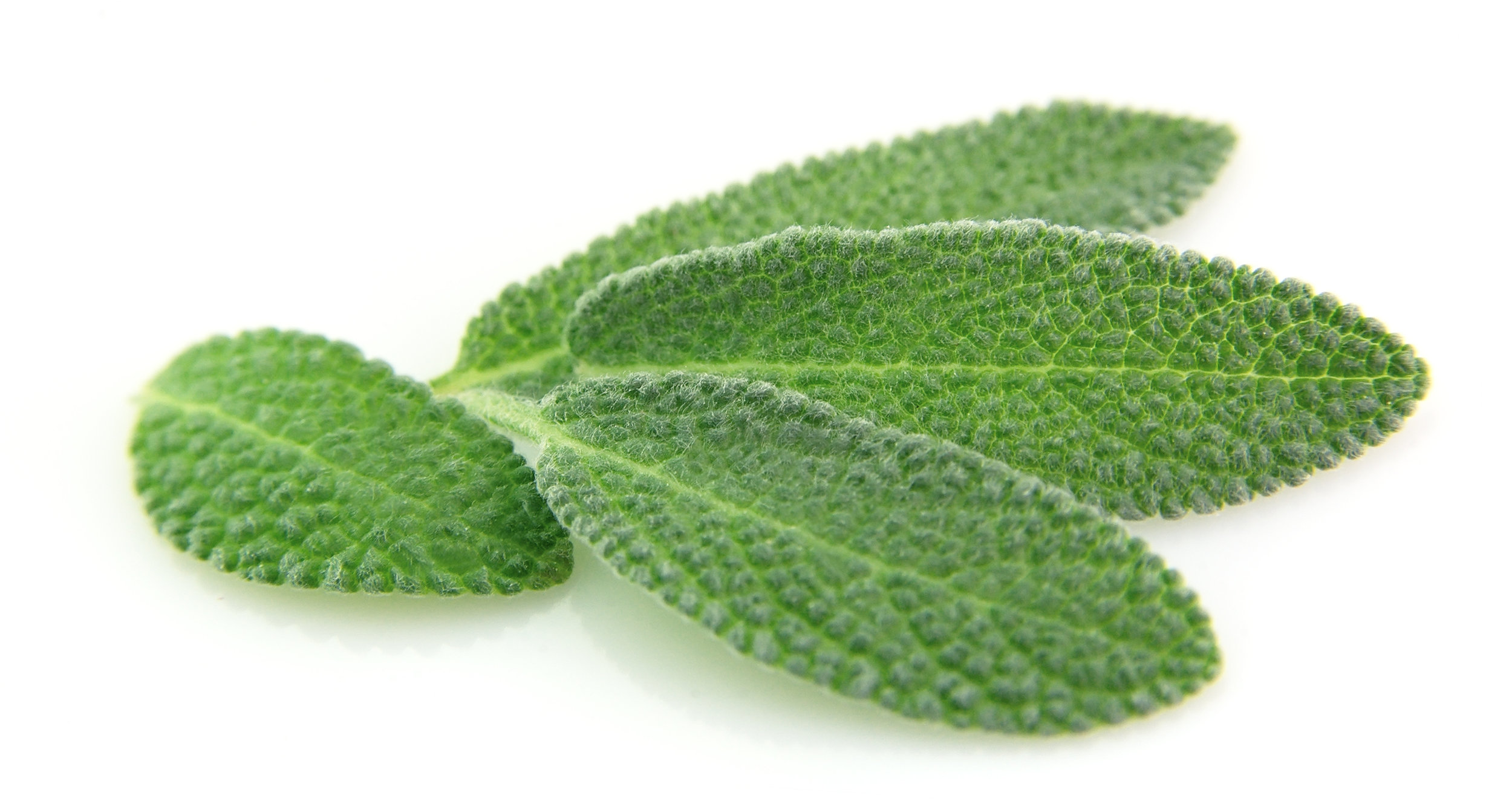 Sage  Strong Antiseptic, Antiviral, Antibiotic, strengthens gums, freshens breath, whitener, removes plaque and Bacteria