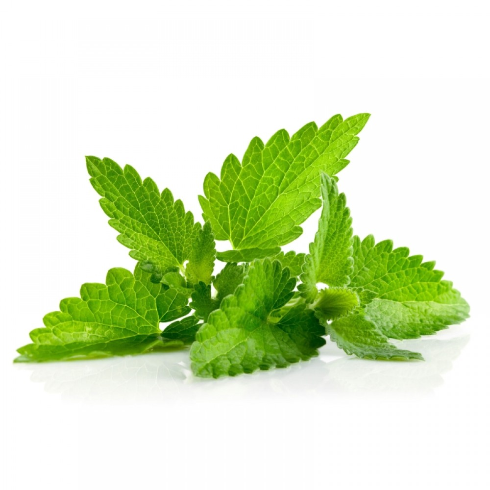 Spearmint  Antiseptic, Antimicrobial, Increases, circulation and blood flow to the gums, freshens breath