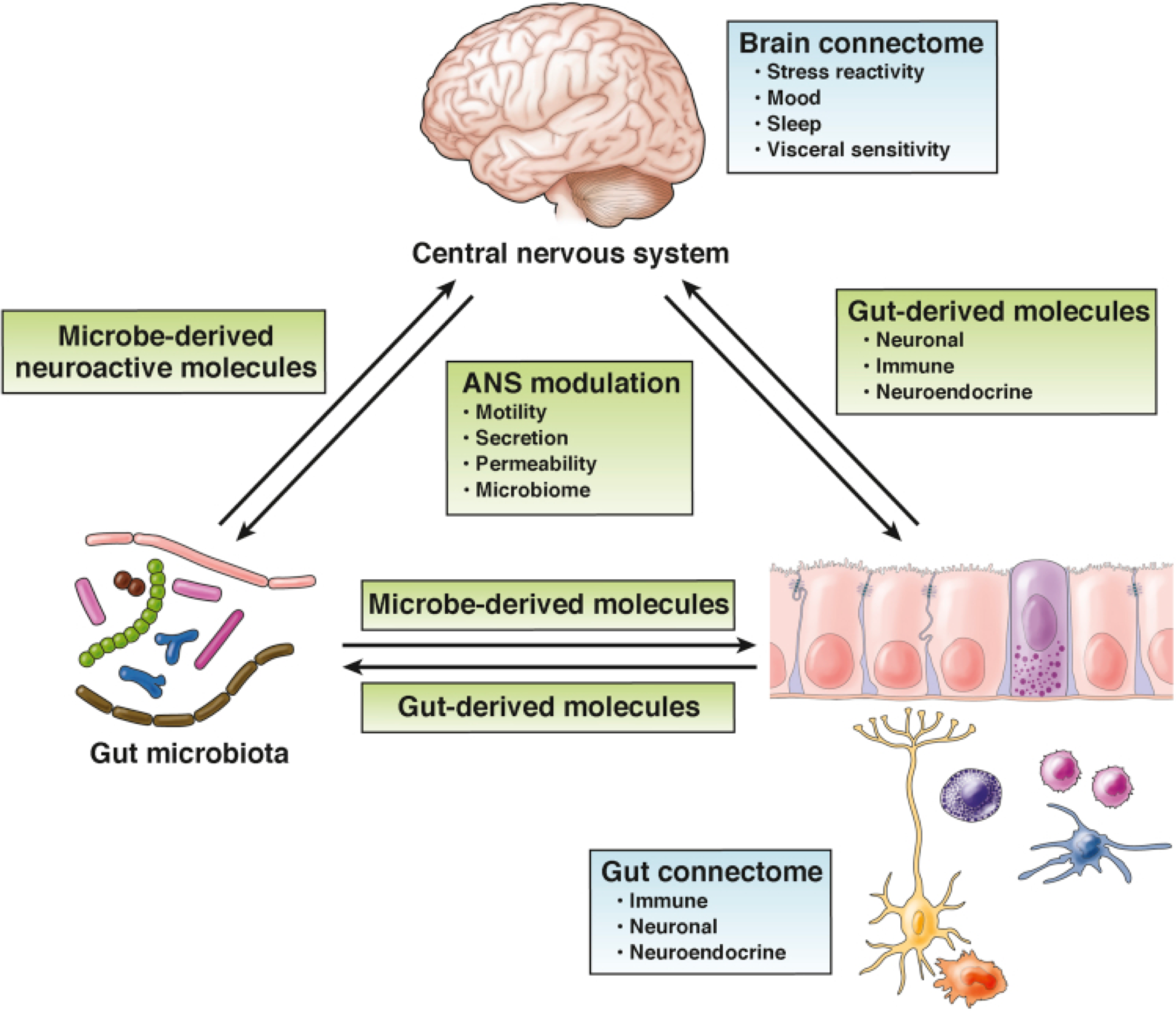 Martin CR, Osadchiy V, Kalani A, Mayer EA. The Brain-Gut-Microbiome Axis. Cell Mol Gastroenterol Hepatol. 2018;6(2):133-148.