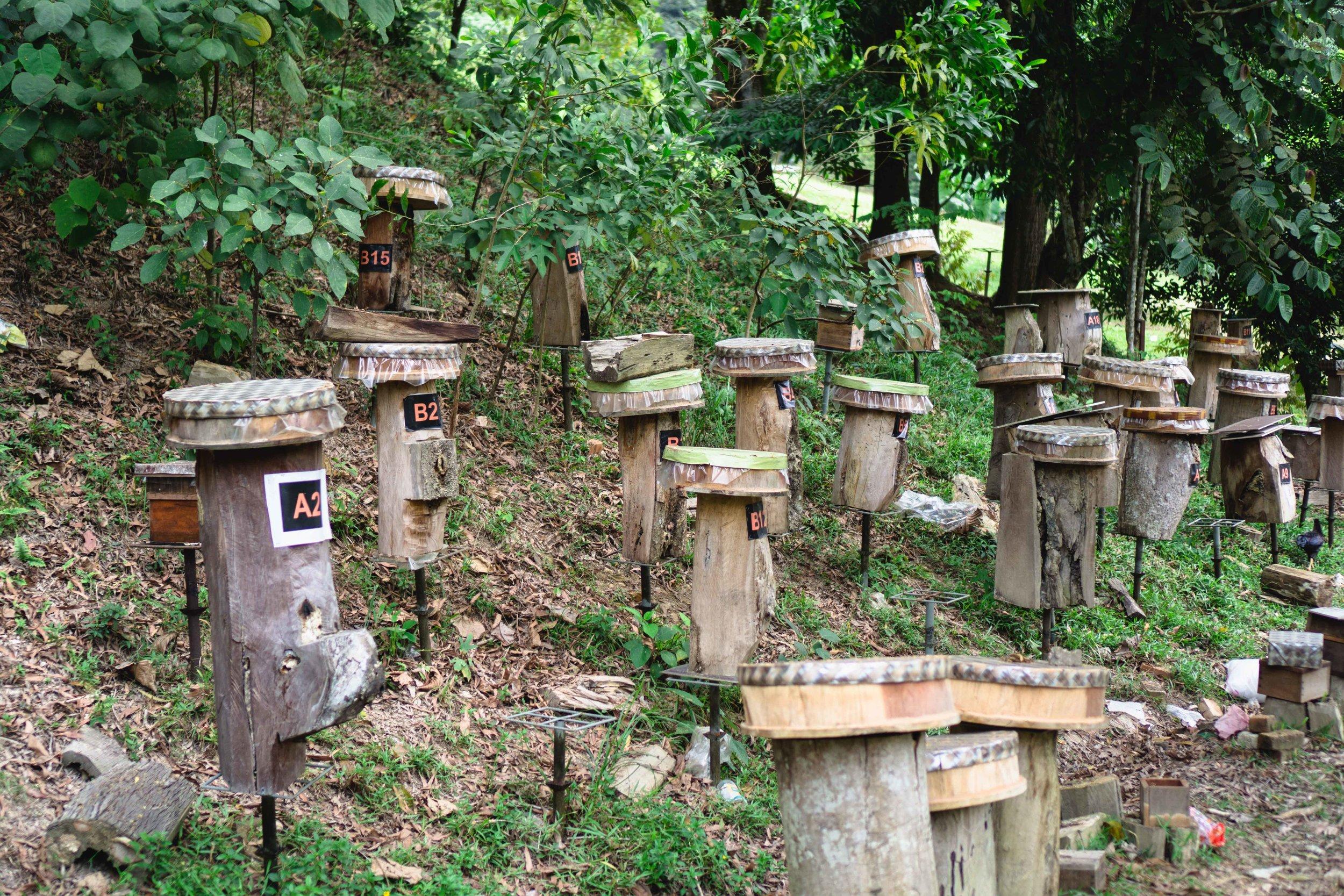 Kelulut Honey Farm