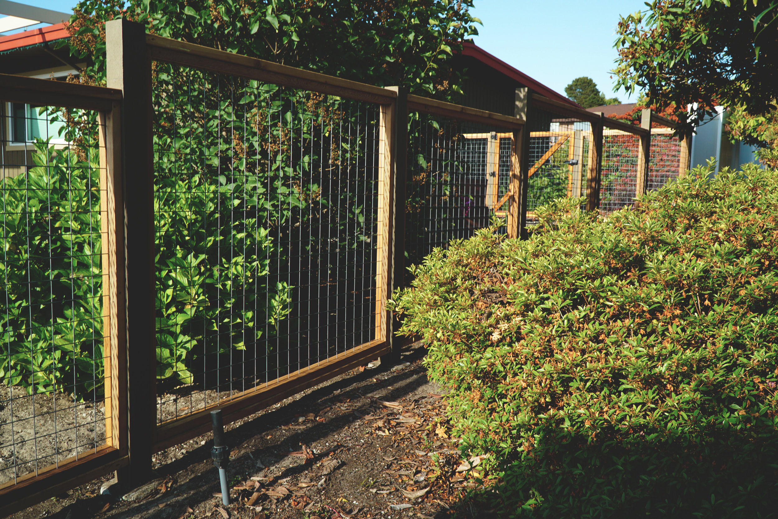 "Custom welded wire mesh (hog wire) fence  (Interior is galvanized aluminum welded wire mesh in 3"" grid. Built with all tight knot cedar lumber.)"