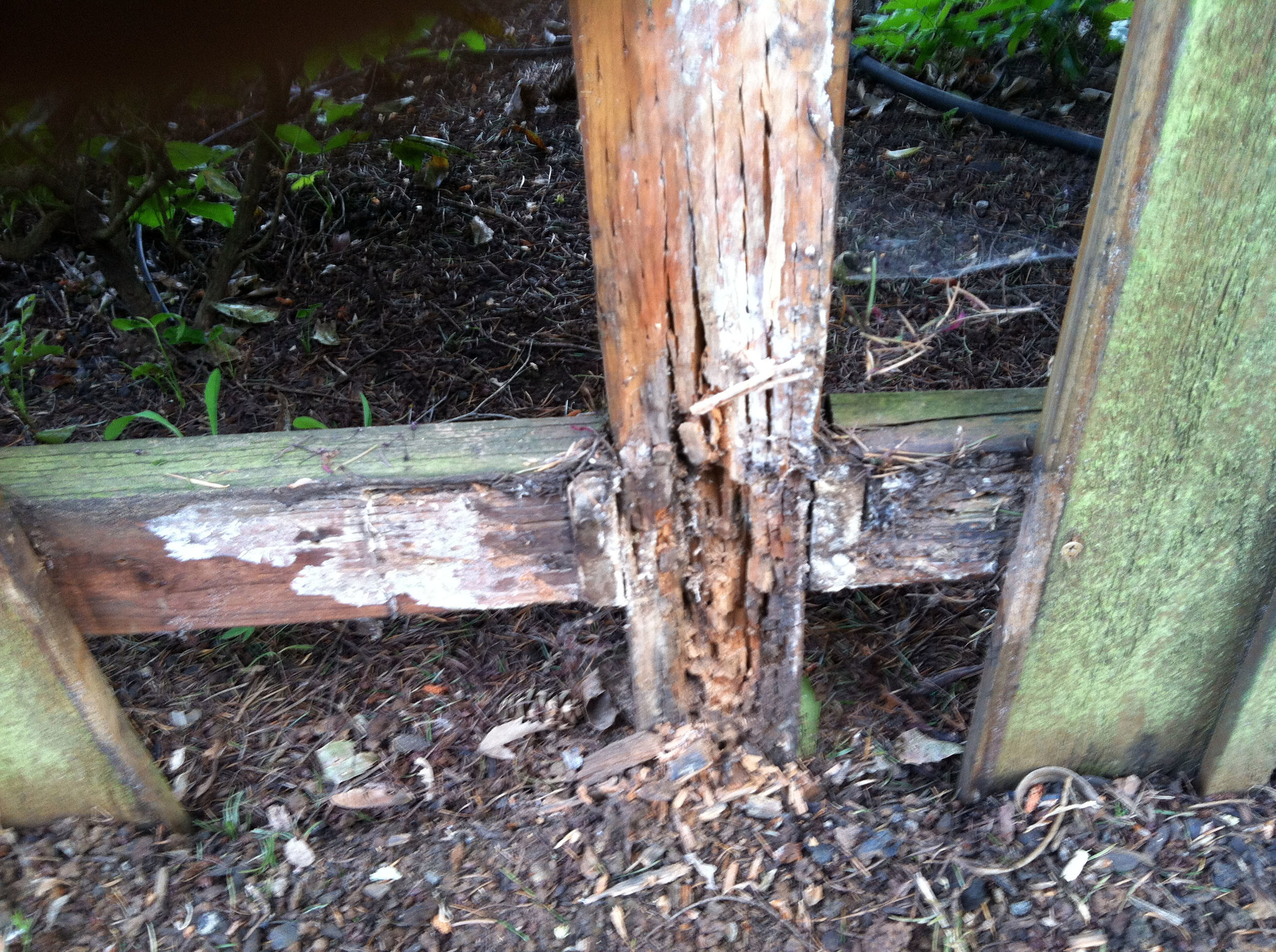 Rotting pressure treated fence posts