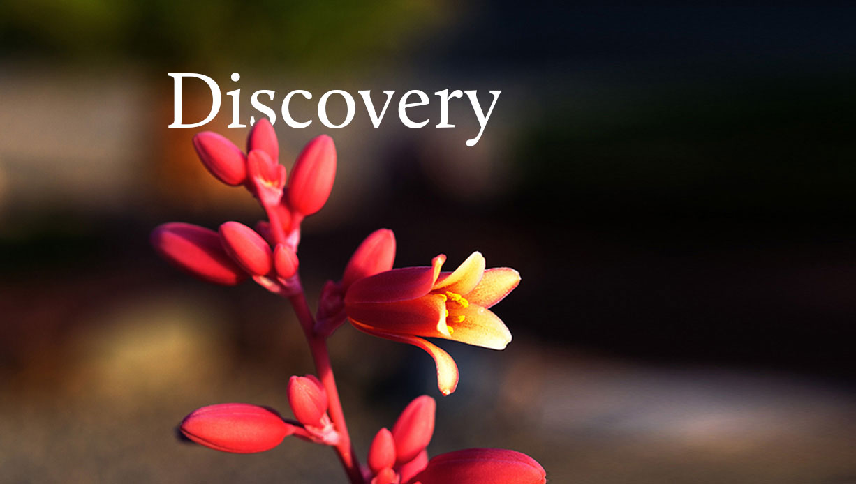 discovery-banner-mobile.jpg