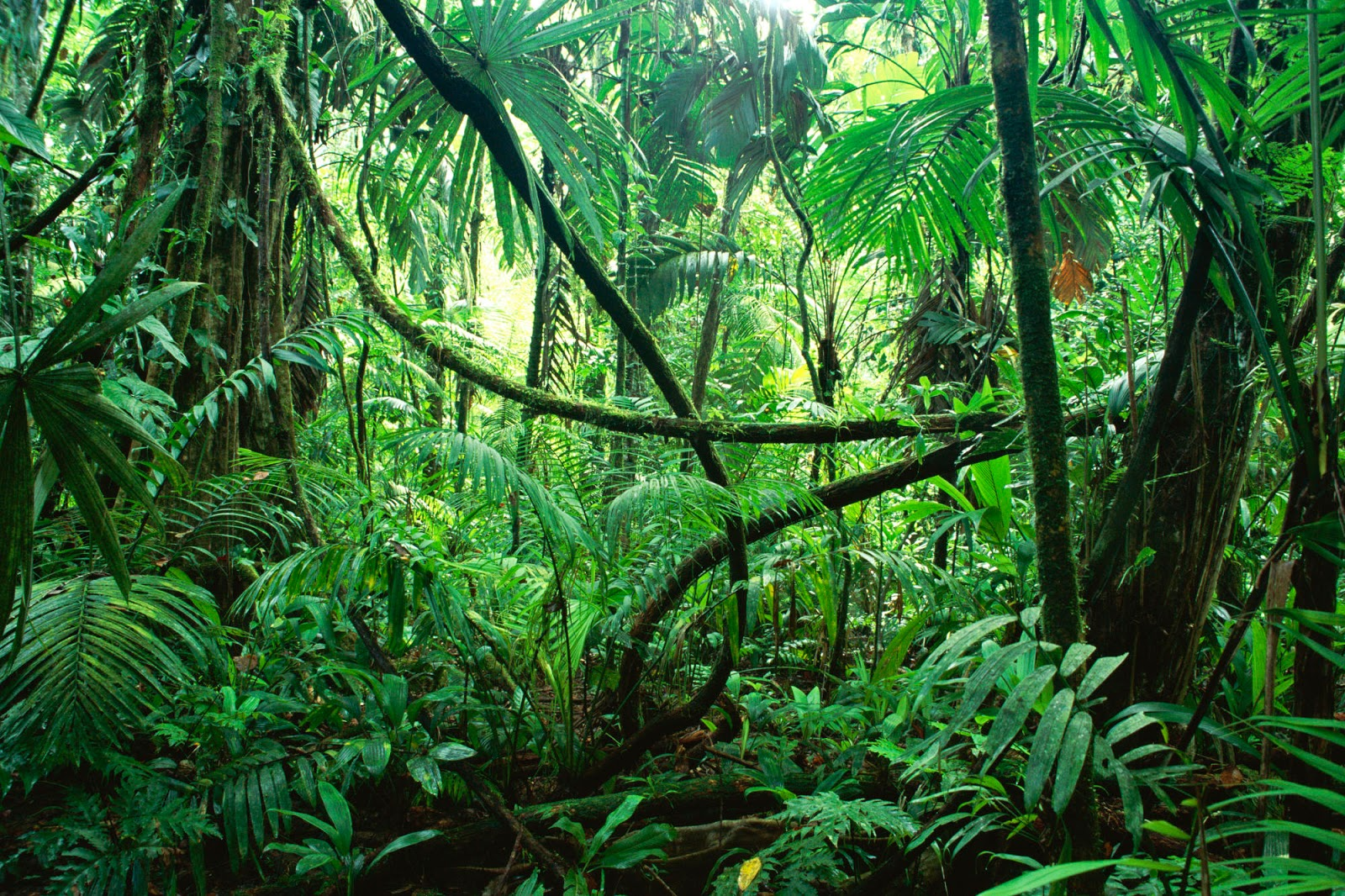 Nosara-Jungle-Costa Rica