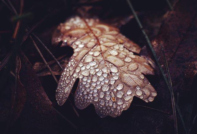 #naturephotography #nature #leaf #hiking #peak #canon #canoneos #canonphotography #macrophotography