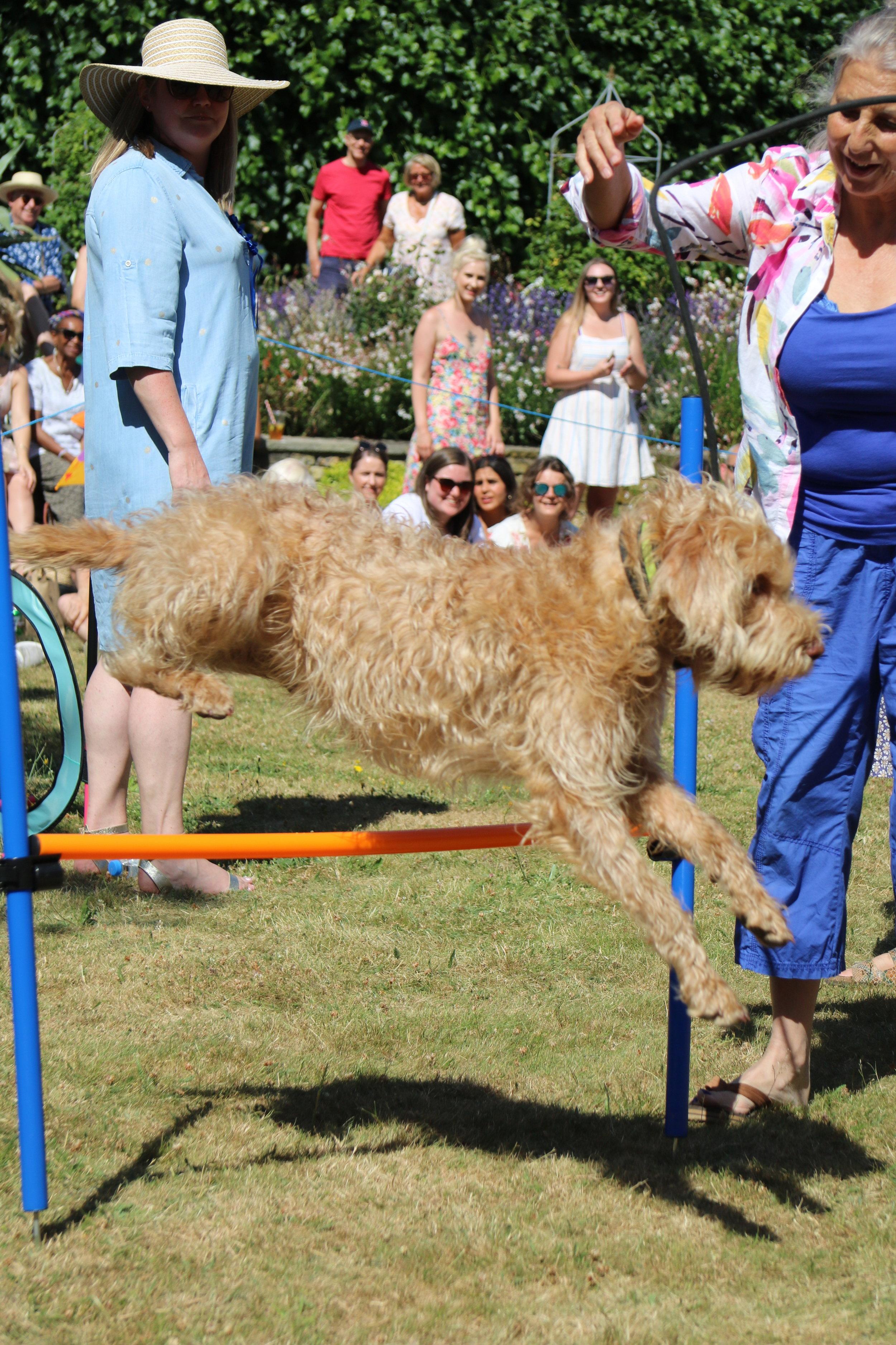 Dog show 13.JPG