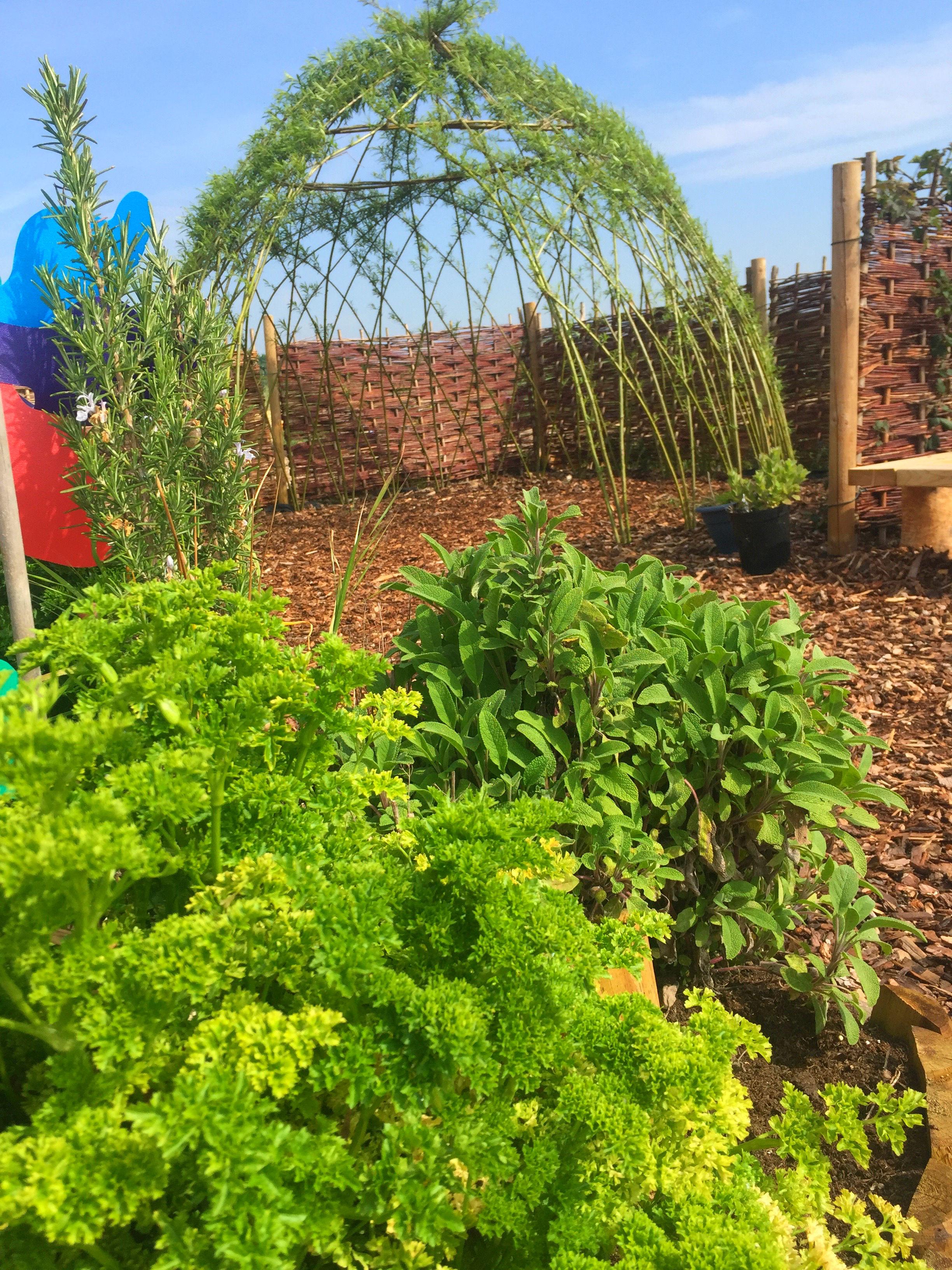 NS Herbs Willow Den.jpg