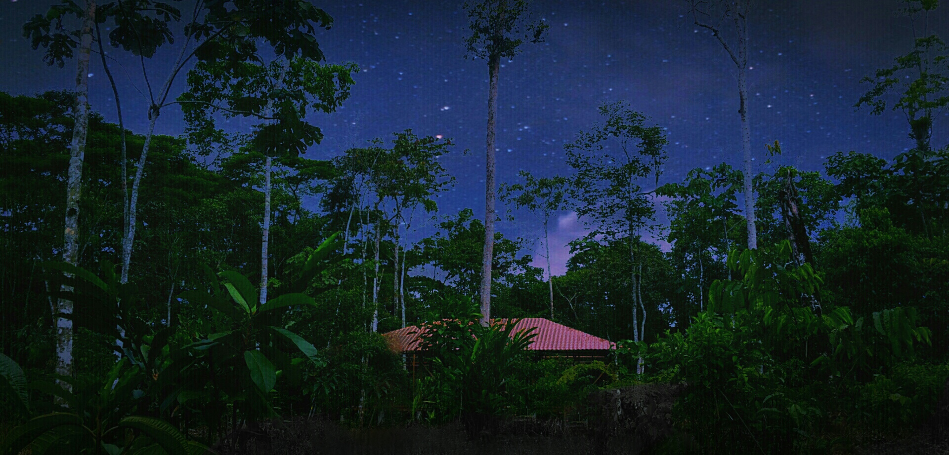 Shamanic Ceremonies Jungle night