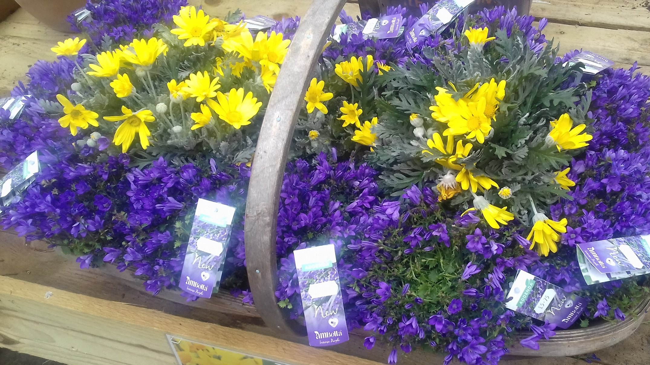 Spring - Plant offers, plus biodegradable pots, plus lots more.
