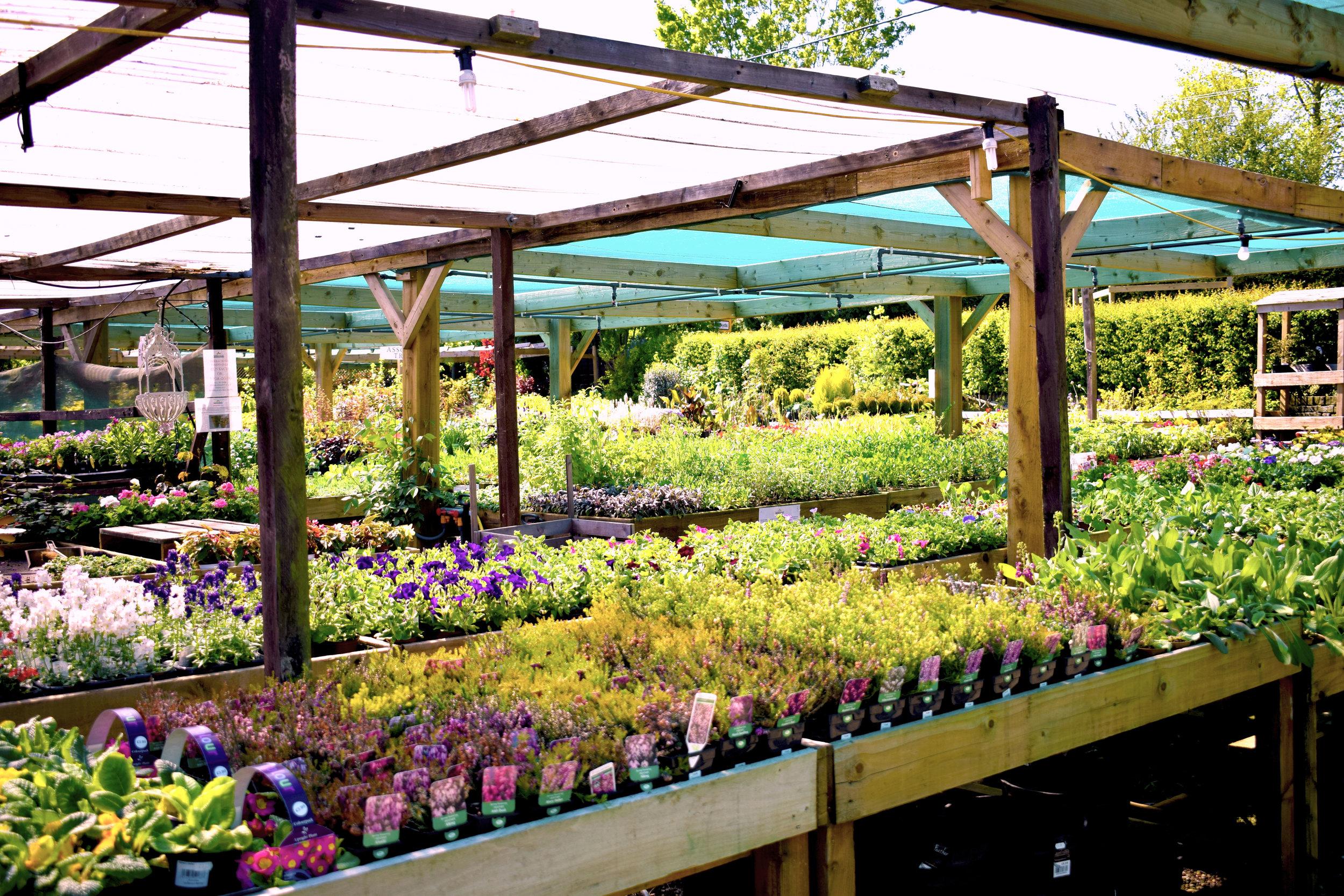 Flower-Beds.jpg