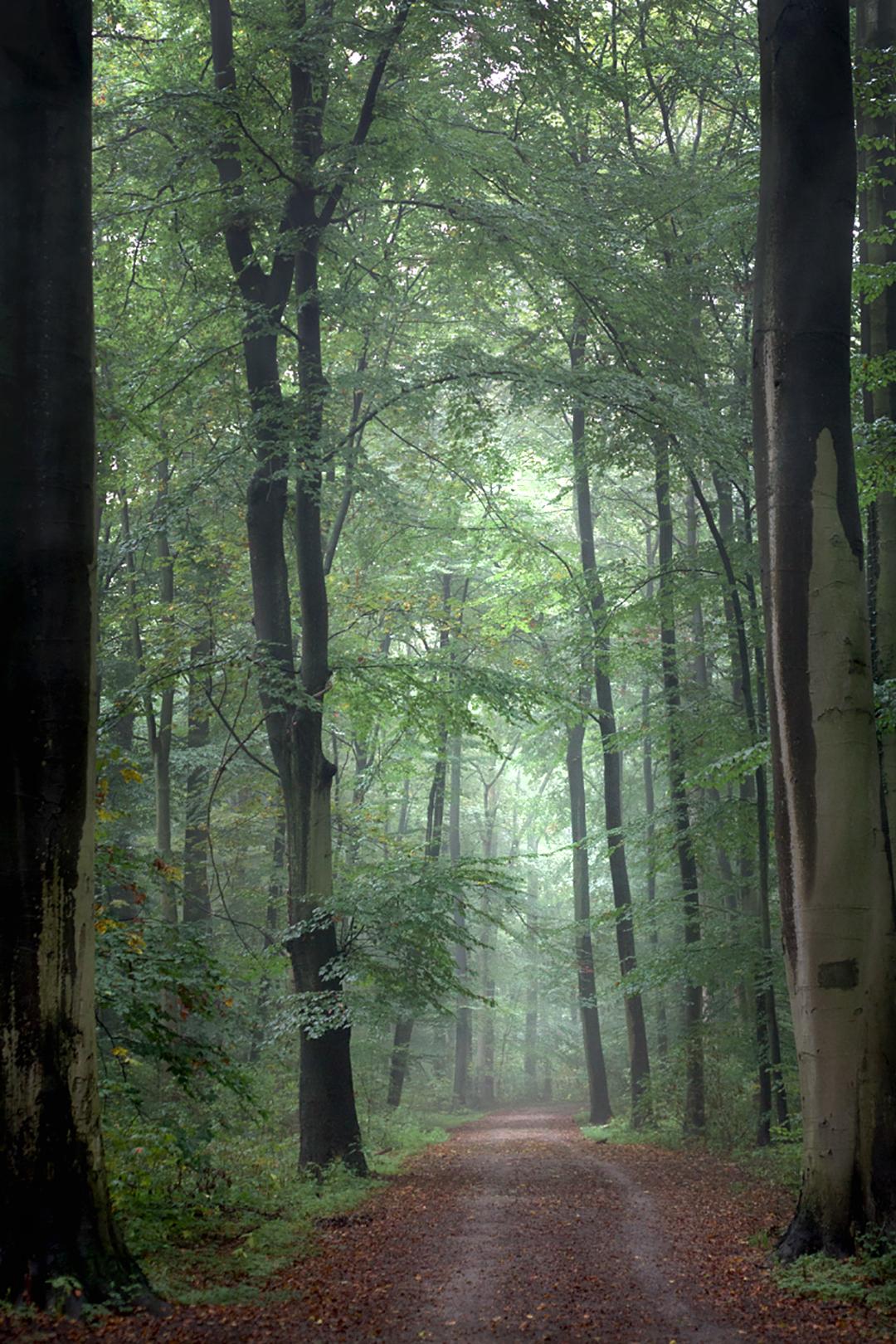 Der Stadtwald in Hannover ist der größte in Europa.