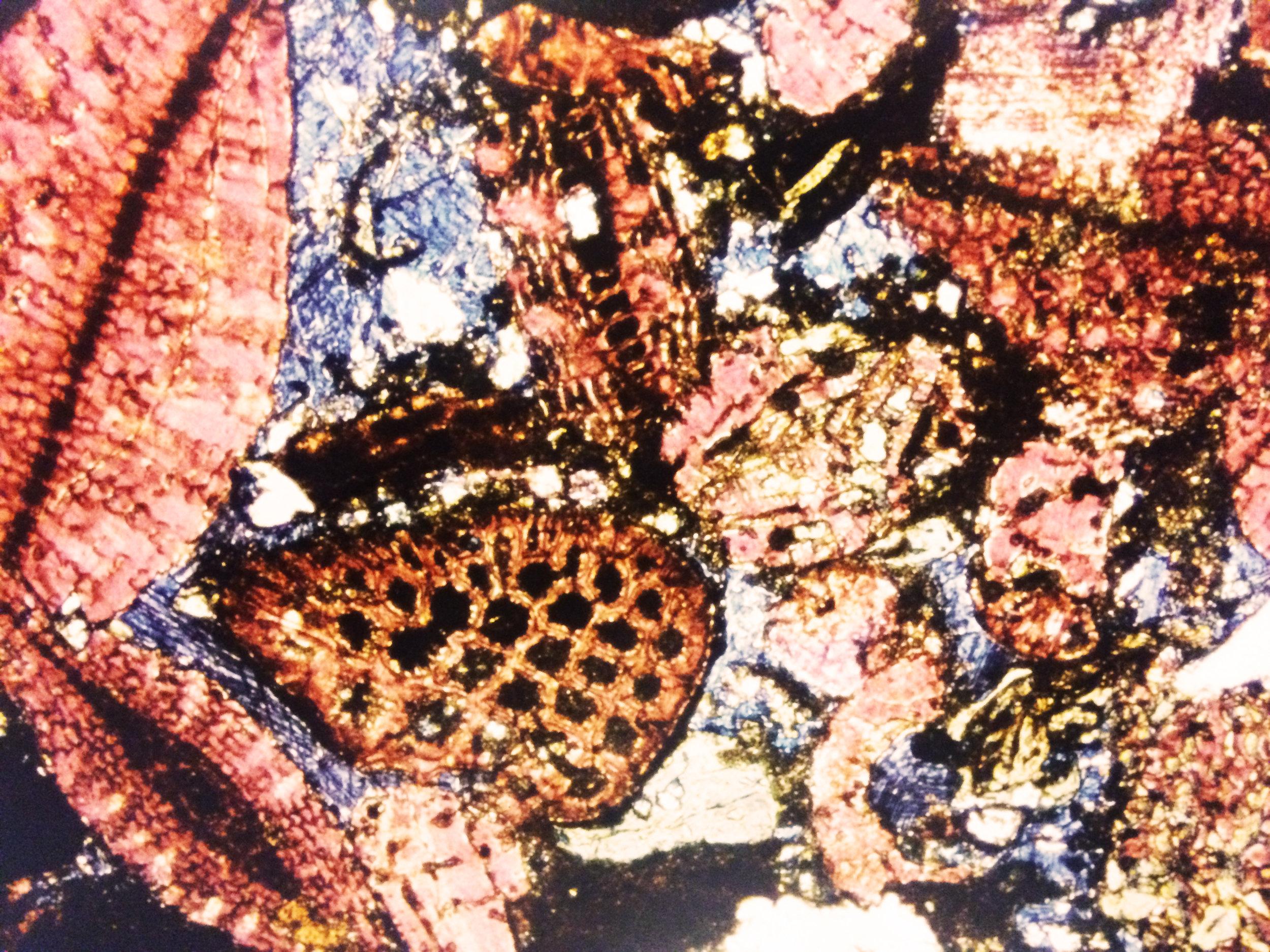 microscope Image Oil