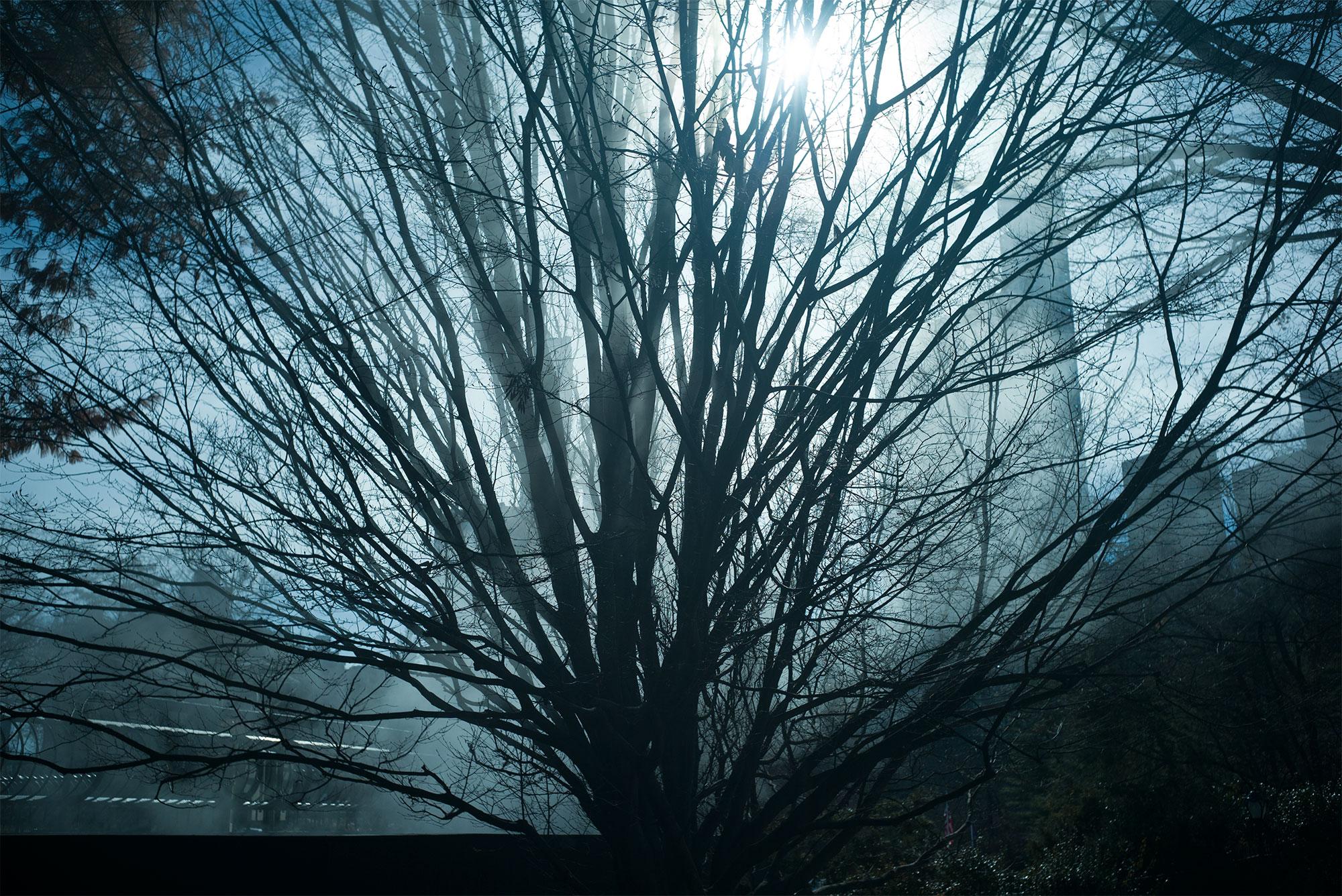 tree_3245.jpg