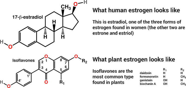 estrogen-vs-phyto.png