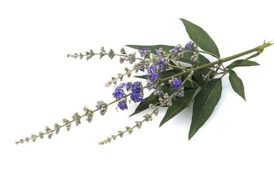 lifespa-image-chaste-tree-berry-vitex-agnus-castus-white-background.jpg
