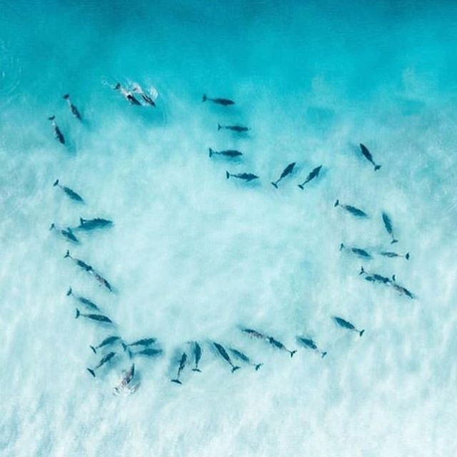 When nature says it all. . . 📷 @zerowastebali . . #love #heart #bali  #dolphin #dolphins #bottlenosedolphin #bottlenosedolphins  #bahamas #itsbetterinthebahamas #underwaterphotography #mermadical #allthingsmermaid #allthingsradical #mermaid #mermaids #beach #beachlife #ocean #surf #surfing #oceanambassador #dogood #saveourseas