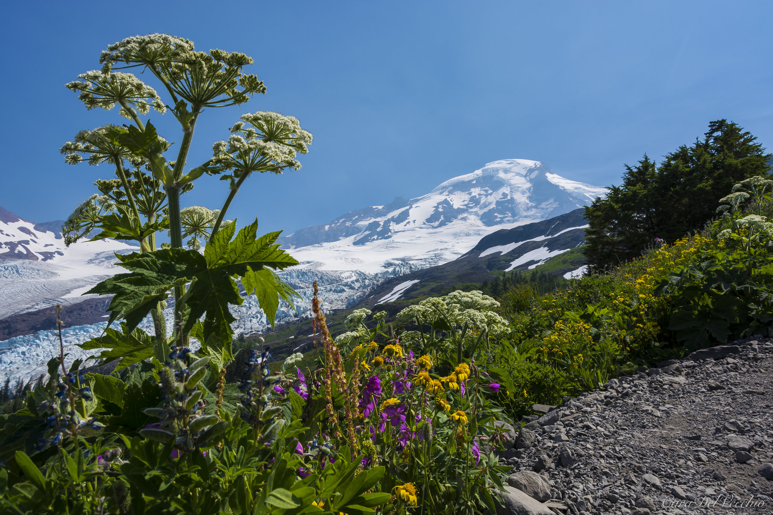 As we broke above the treeline the ridge was a tapestry of wildflowers.