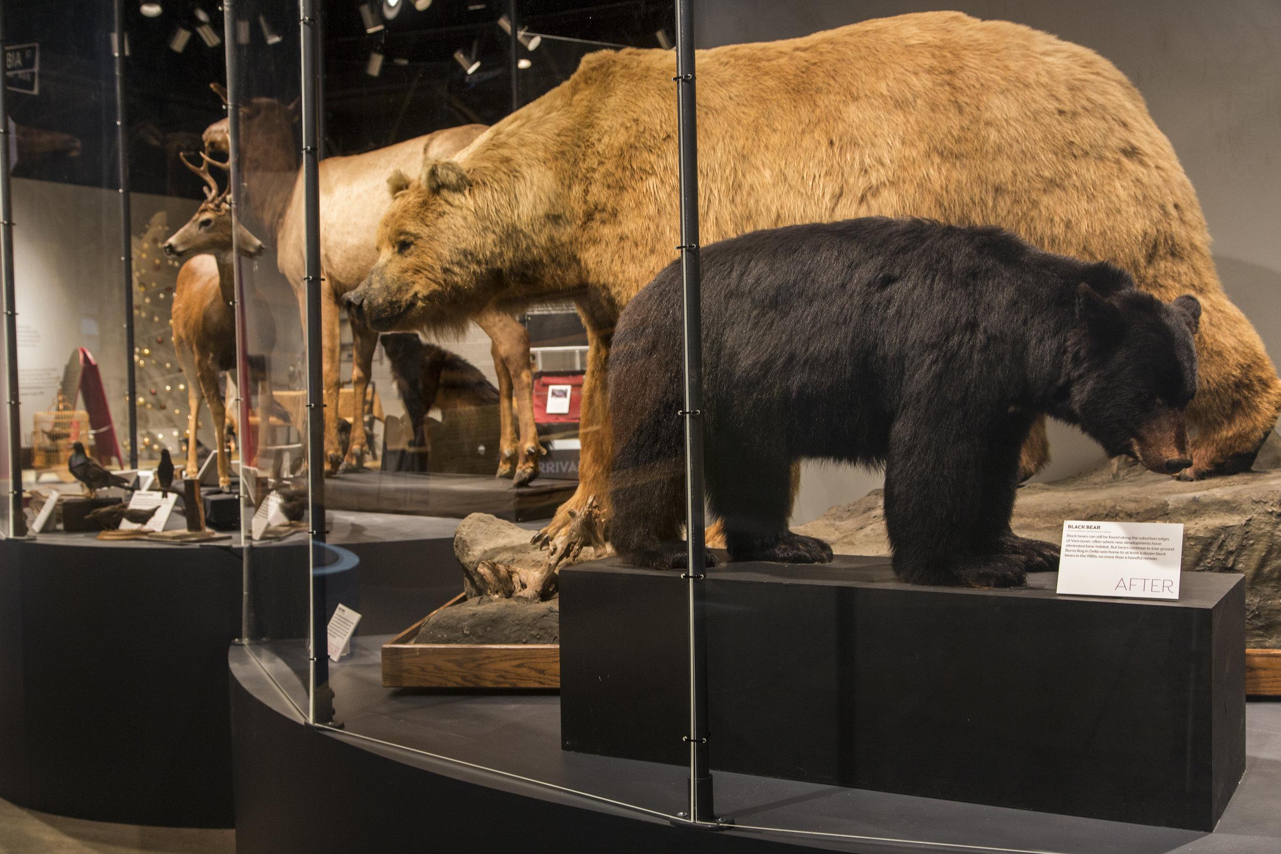 Bears_3727_PRINT.jpg