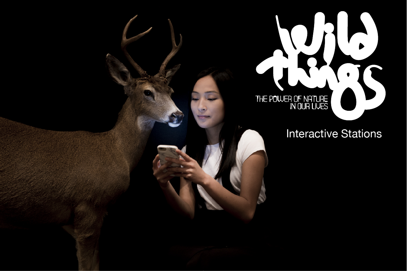 Wild Things - Interactive Stations.jpg