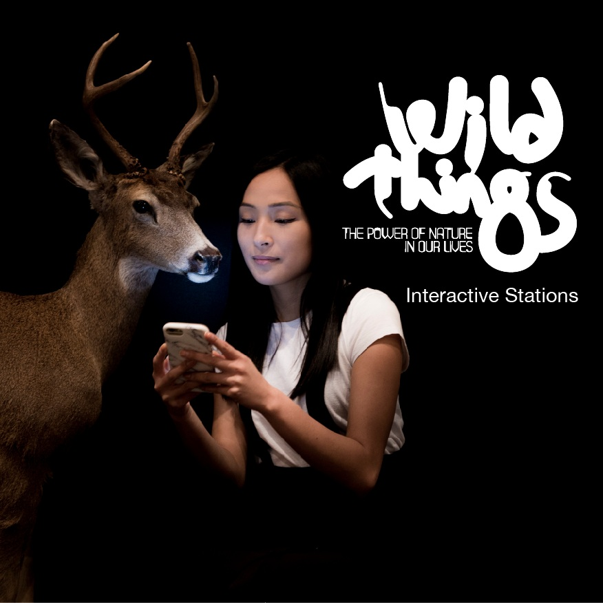 Wild+Things+-+Interactive+Stations2.jpg