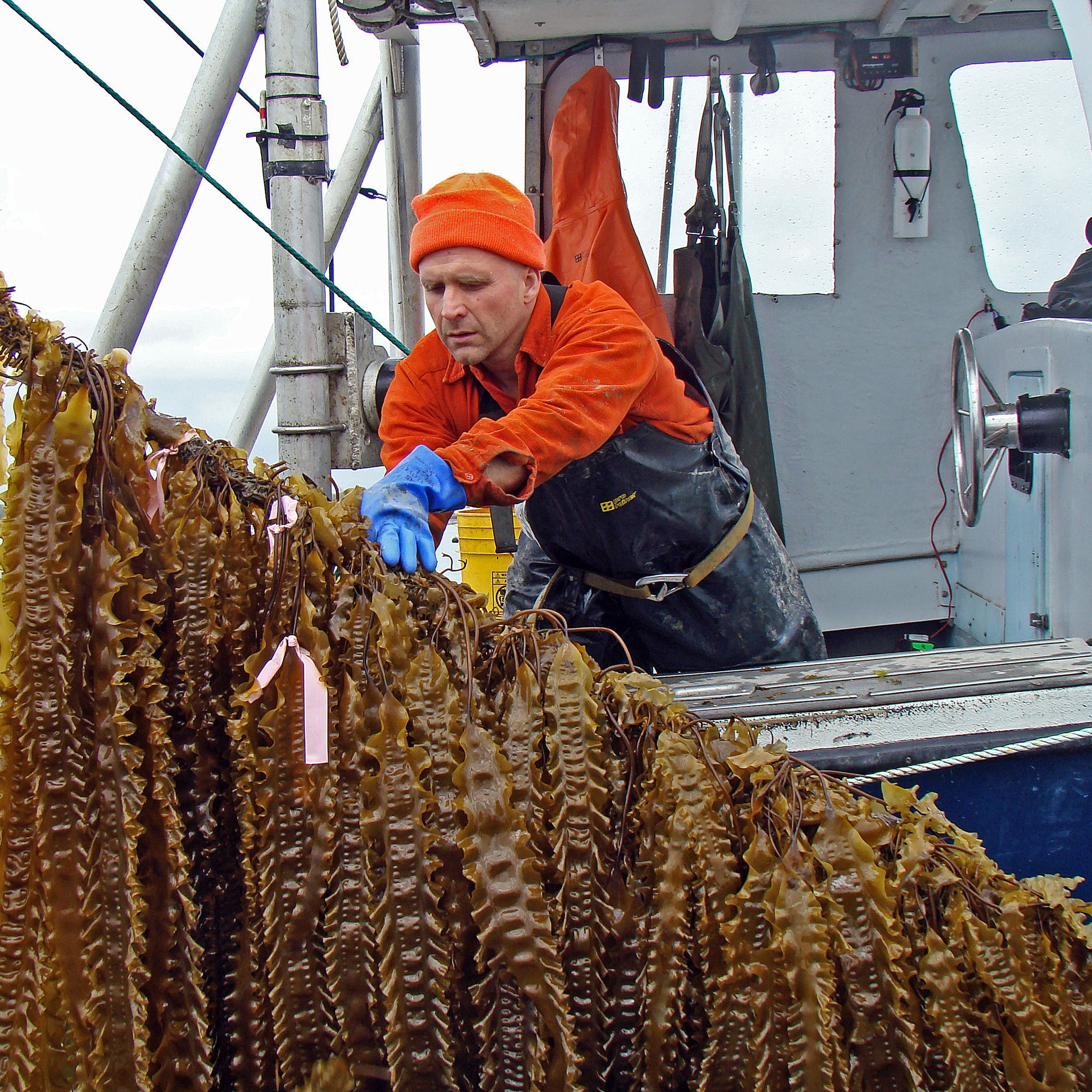Seaweed+1+HR.jpg