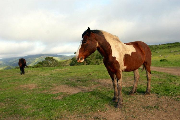 Horse Supplies