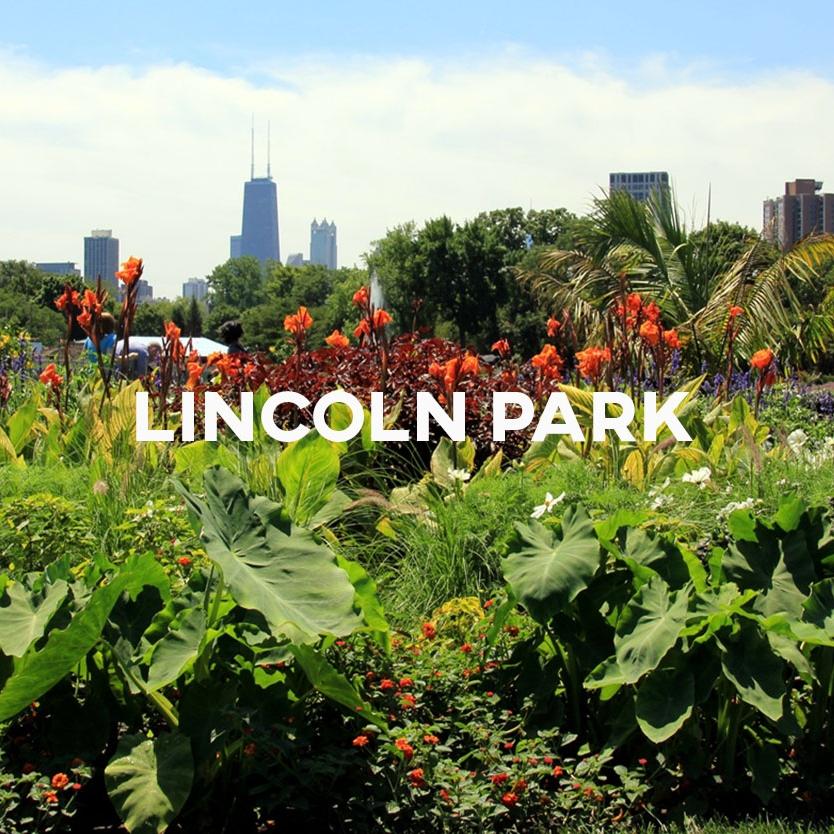 Lincoln Park Cover.jpg