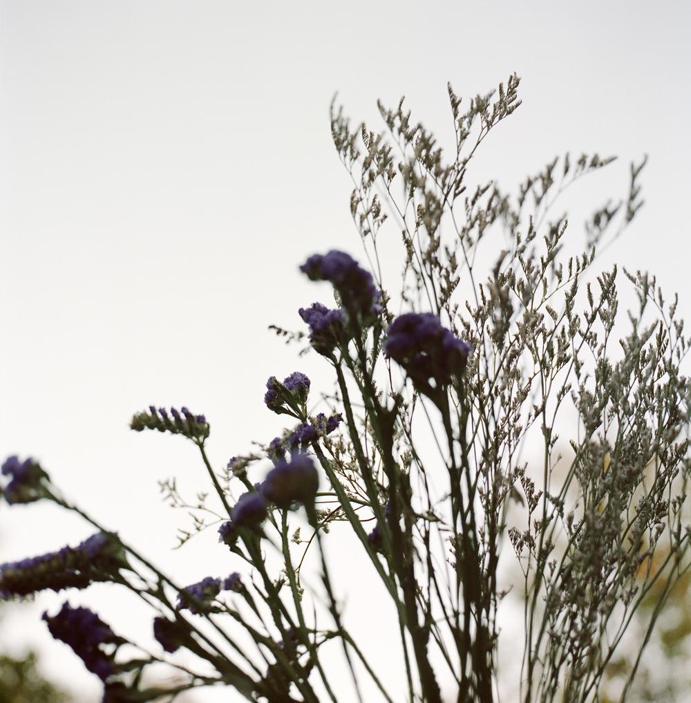 Christina-Arza-Flowers-2.jpg