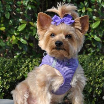 american-river-ultra-chokefree-mesh-dog-harness-purple-2.jpg