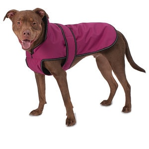 Pet Clothes in Bergen County