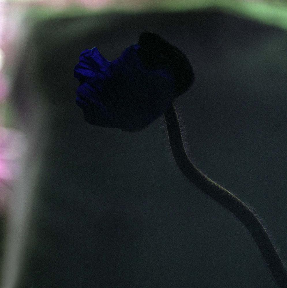 Deep Blue Shade