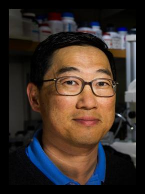 Seung K. Kim
