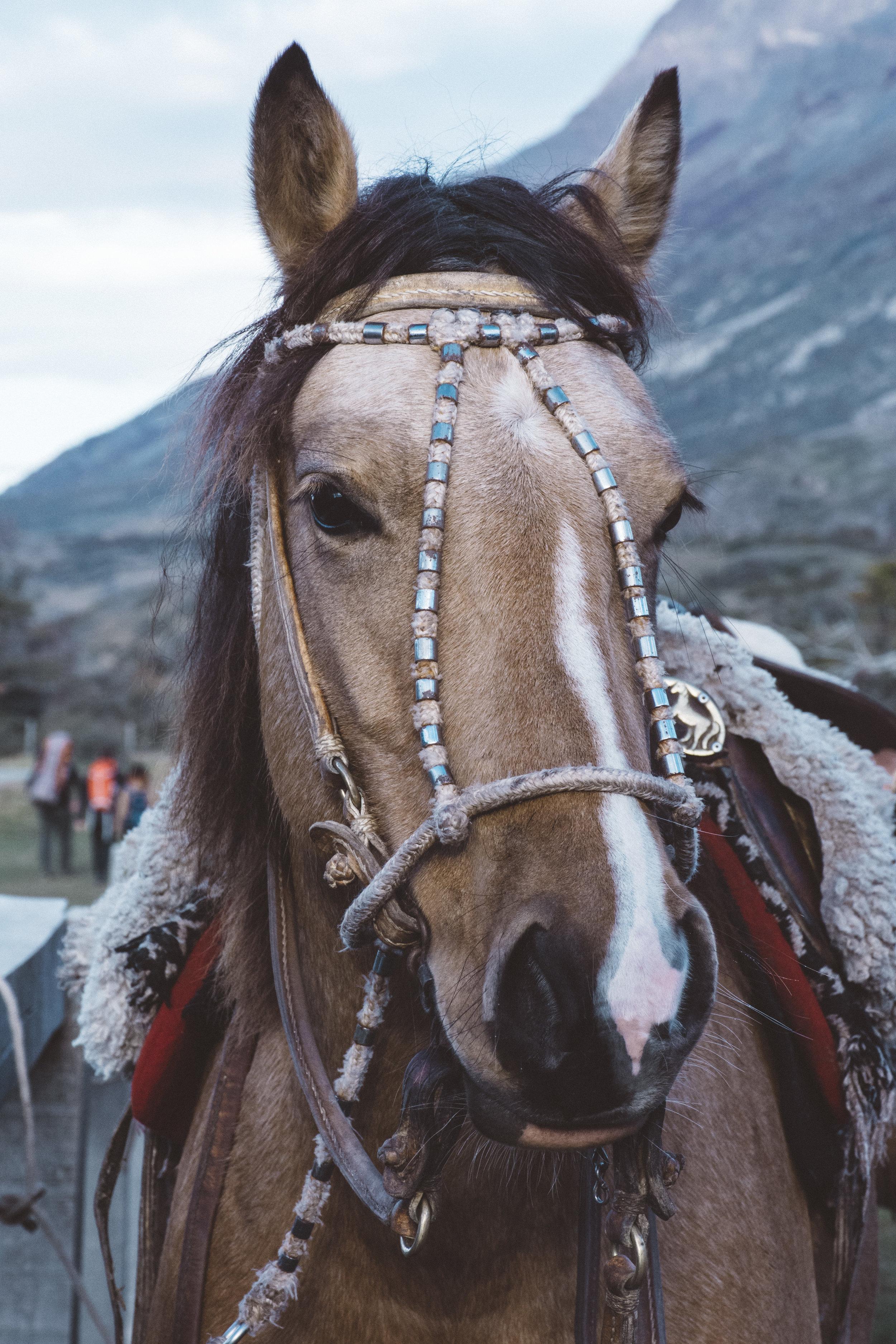 Juan's lovely horse