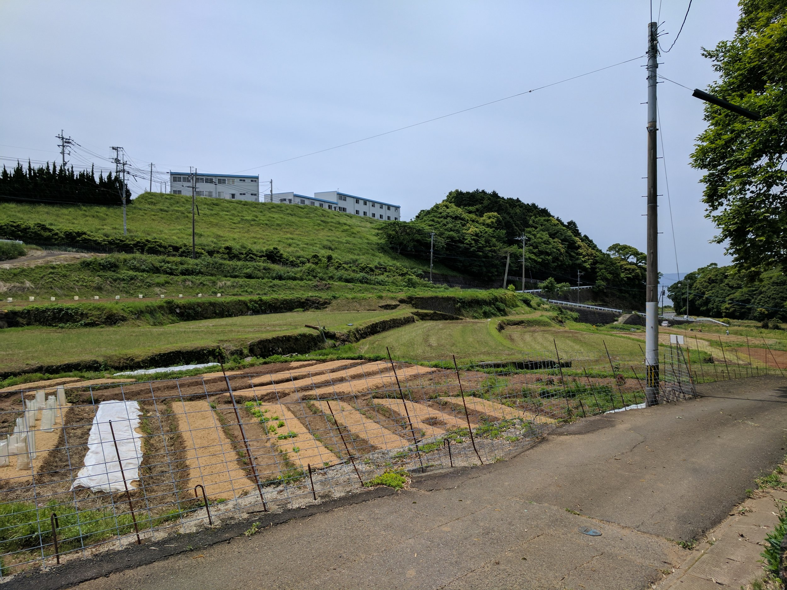 WWOOF farm outside Nagasaki. I stayed here with Yuki on Airbnb because it was on the way to the airport, but Yuki runs a real farm and takes longer term volunteers!