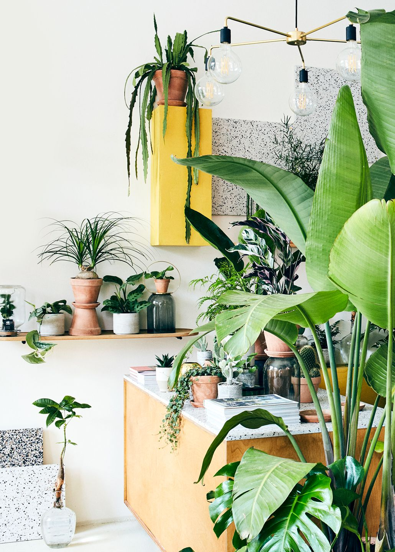 Plant København er en moderne plantebutik og showroom med grønt fra gulv til loft - I Plant København kan du finde alt til den moderne planteindretning. Vi har eksotiske palmer, smukke grønne stueplanter, træer, skovbundsbregner, særlige kaktusarter, airplants, knoldplanter, stiklinger og meget mere.Du kan også blive inspireret af vores udvalg af plantetilbehør, og vi hjælper gerne med at ompotte dine yndlingsplanter i smukke krukker, glas og unik keramik.