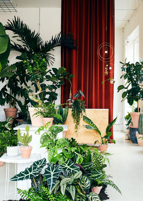 Et plantekoncept med rødder - Vi mener, at alt grønt skal have lov til at være levende. I Plant København finder du derfor kun planter med rødder. Dogmet har et bæredygtigt perspektiv, fordi vi er vilde med ideen om, at planter med rødder ikke bare bliver smidt ud efter et par dage, men kan holde i mange år og udvikle sig over tid.