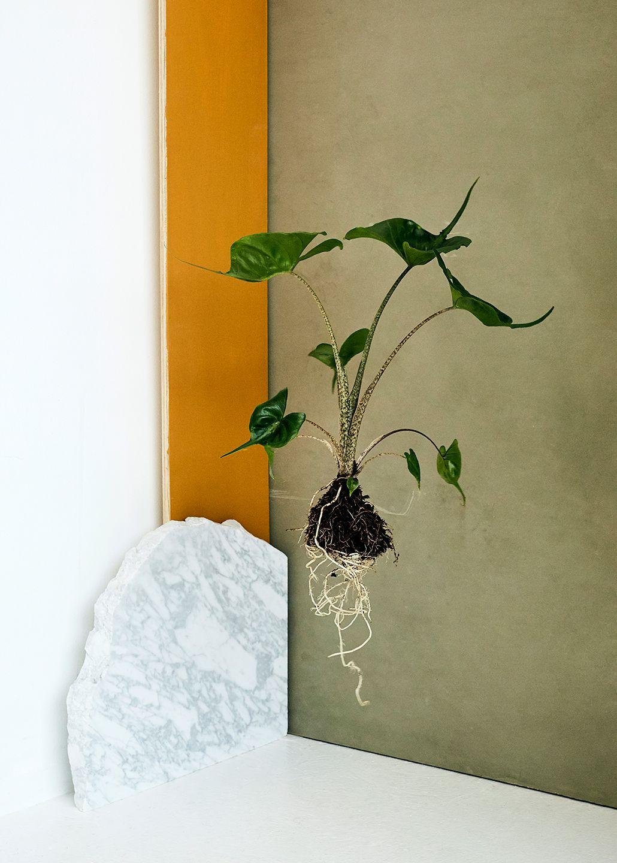 """""""Alt i Plant København har rødder, fordi vi mener, at planter skal have lov til at være levende."""" -"""