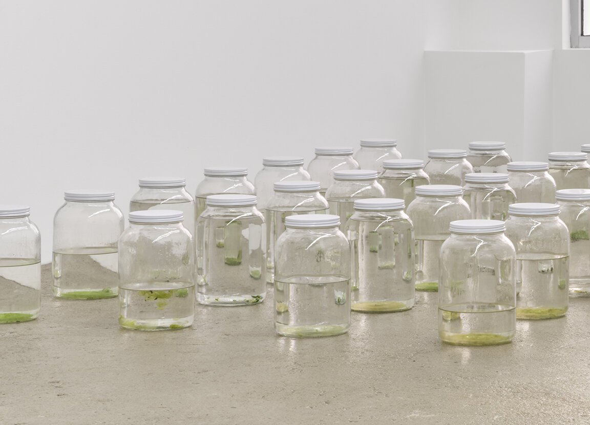 Amina Ross Untitled , 2020 - ongoing 45 one gallon glass jars, rain gutter water size variable to installation AR1, AR2-AR46