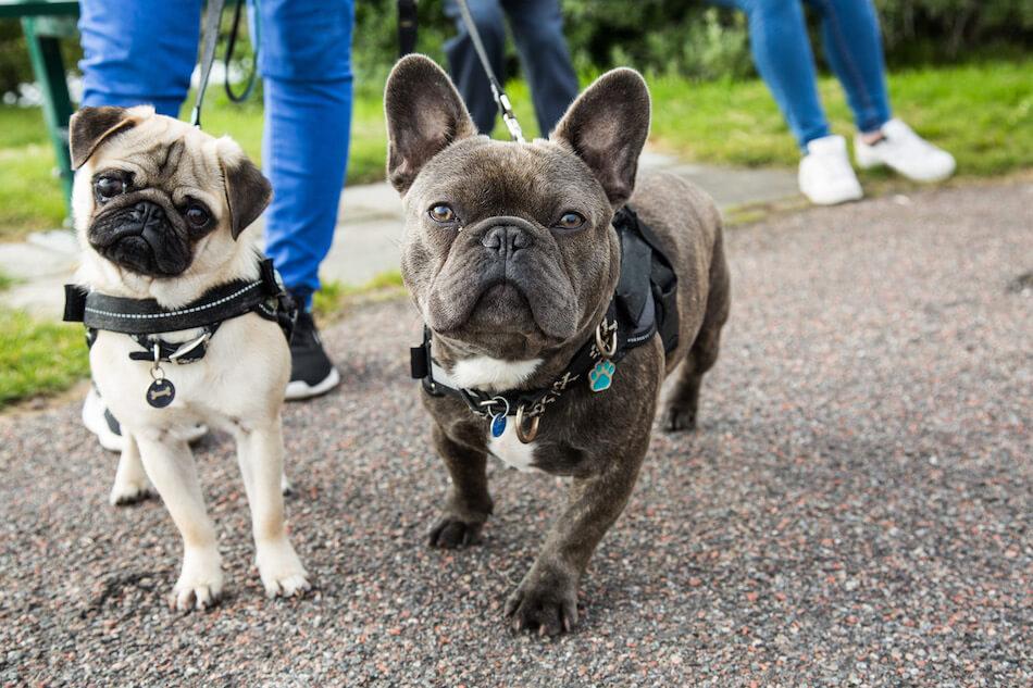 2 Dog Walk.jpg