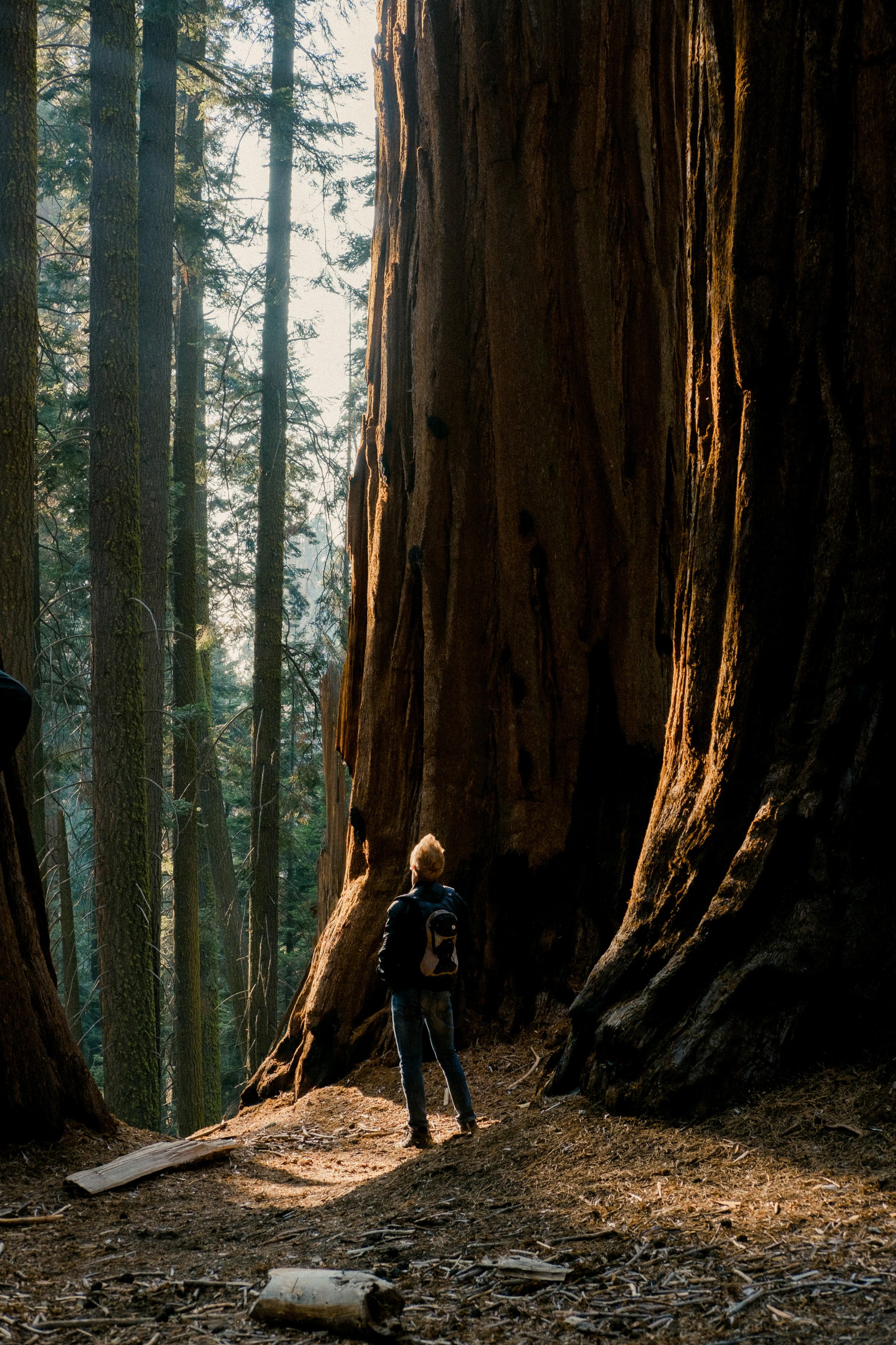 11-10-18 Sequoia-104.jpg